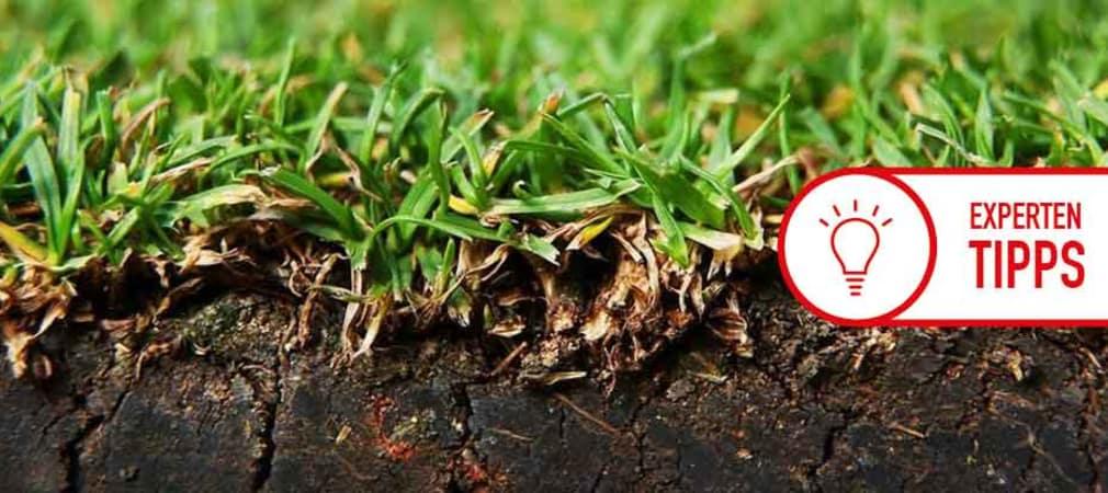 Gräsersorten gräsersorten wissen sie eigentlich worauf sie spielen