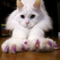 Soft Paws deals alerts