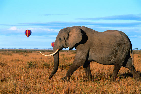 Tours4Fun_International-Vacations_7-Day-Kenya-Safari-at-$500-OFF