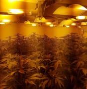 Cannabis Crop Crafers West 1 (supplied).jpg