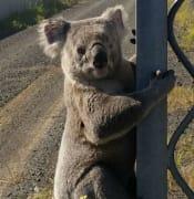 koala mine site pole.jpg