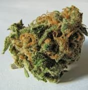 cannabis file image 1