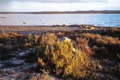 Coorong (Flickr Gary Sauer-Thompson).jpg