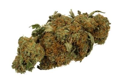 Marijuana (wiki commons).jpg