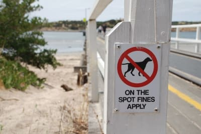No dogs (resized).jpg