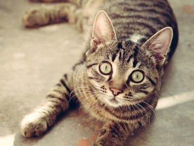 cat-618470_960_720.jpg