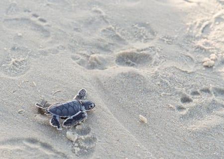 Its-Turtle-Season-at-Mon-Repos-main.jpg