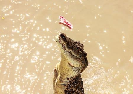 Jumping Croc Tour NT Darwin
