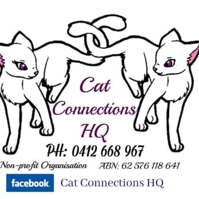 Cat Connections HQ Sunday Sessions Fundraiser