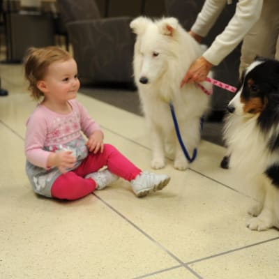 Therapy_dogs_visit_USAF_Hospital_Langley_140214-F-TM985-003.jpg