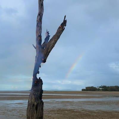 Lone Tree Mackay Belinda McMahon.jpg