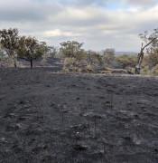 burnt ground.jpg