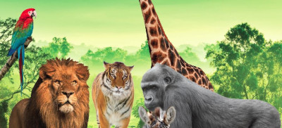 FREE Safari Zoo Animals Exhibit at Warrawong Plaza