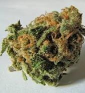 cannabis file image 1