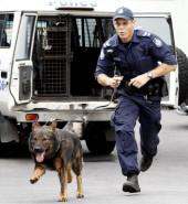 police dog hahm