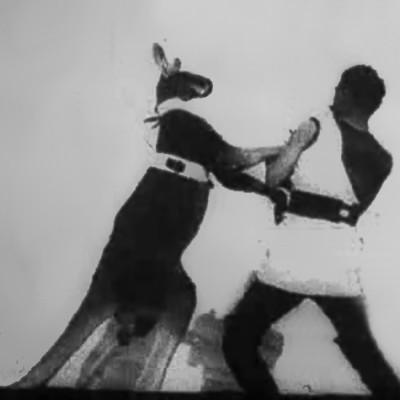 Boxing_Kangaroo.jpg