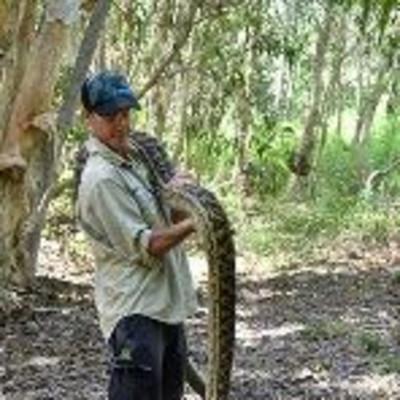 cairns snake catcher python 1