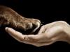 animal-and-human animal