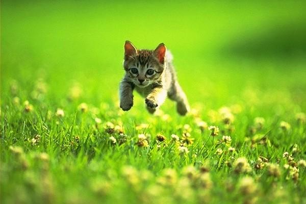 cute-kitten-playing