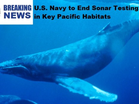 U.S. Navy Agrees to Settlement to End Sonar Testing in Key Habitats in the Pacific Ocean of Whales and Dolphins