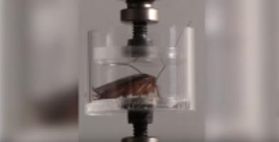 Robotic Cockroaches