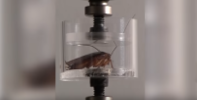 Robotic Cockroaches
