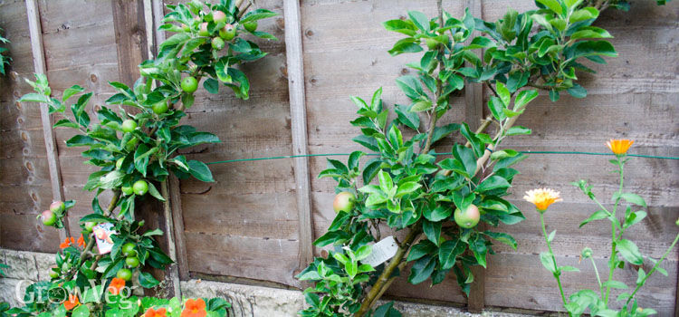Growing fruit and vegetables in small spaces - Growing in small spaces image ...