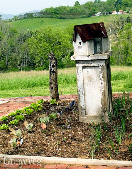 Virtual Landscaping Upload Picture : How to keep on gardening when things get tough