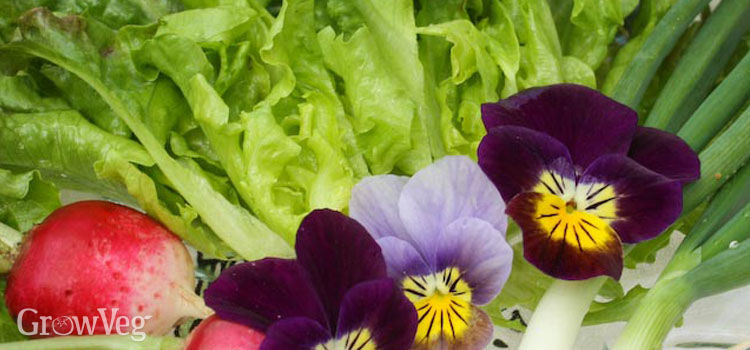 Salad with violas