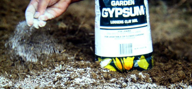 Soil With Gypsum Additives : Growing vegetables in clay soil