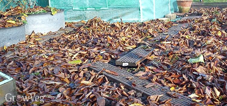 Leaf mulch in a vegetable garden