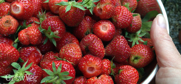 A bowl of 'superfood' strawberries