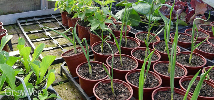 Hardening off seedlings