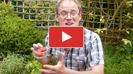 Choose and Grow the Best Tasting Strawberries