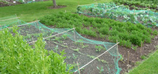 A no-dig allotment (image courtesy of the Good Gardeners Association)