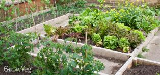 Front garden vegetable beds