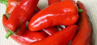 Chilli, also known as Chilli Pepper, Hot Pepper