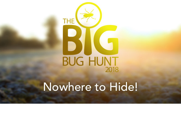 The Big Bug Hunt