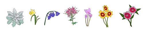 Flowers and bulbs