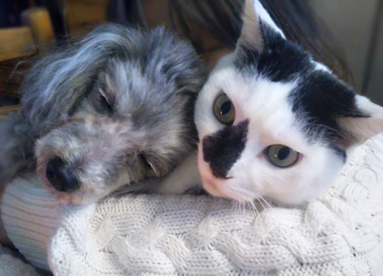 犬と猫どっちも飼ってると毎日たのしいの画像 p1_5