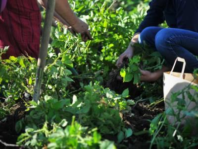Bilde fra Ullandhaug økologiske gård