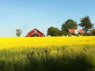 Bilde fra Walle gård