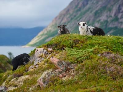 Bilde fra Lille Langøya Fiskerbonde