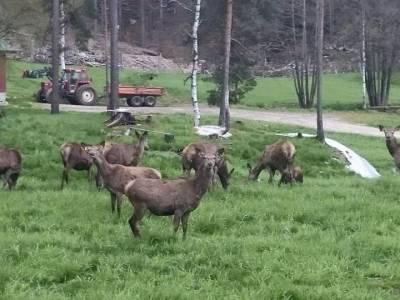 Bilde fra Skjeggedal Sørgard