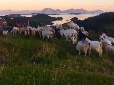 Bilde fra Bonden på Rinbø