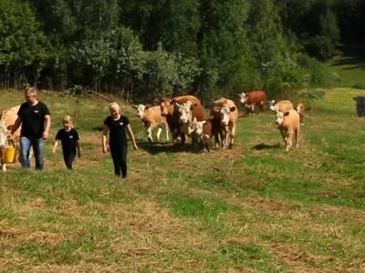 Bilde fra Stene gård
