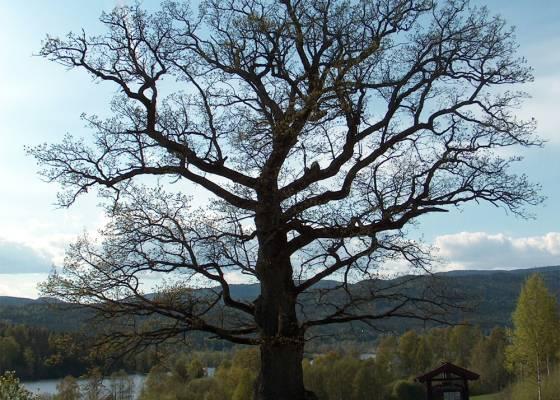 Bilde av Drammen