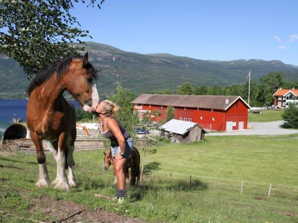 Hanne Høne - Veikåker Gårdsdrift