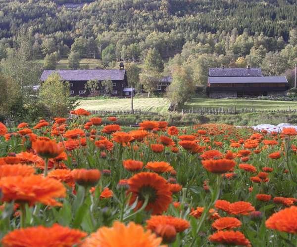 Bilde fra Aukrust Gard og Urteri