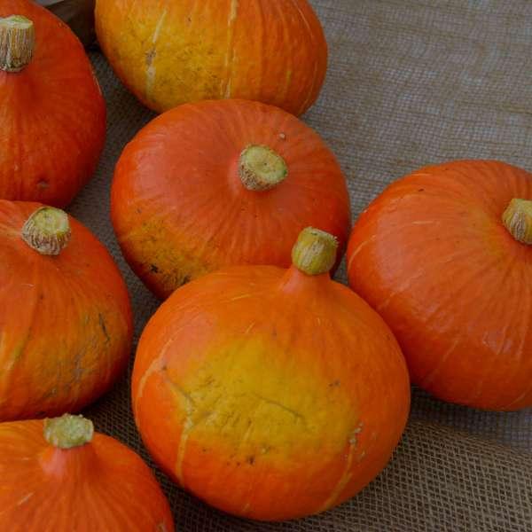 Bilde av Elses grønnsakssmykker
